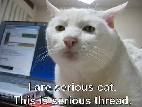 Serious_cat_2